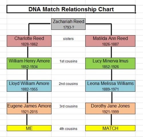 Reed DNA Match Chart